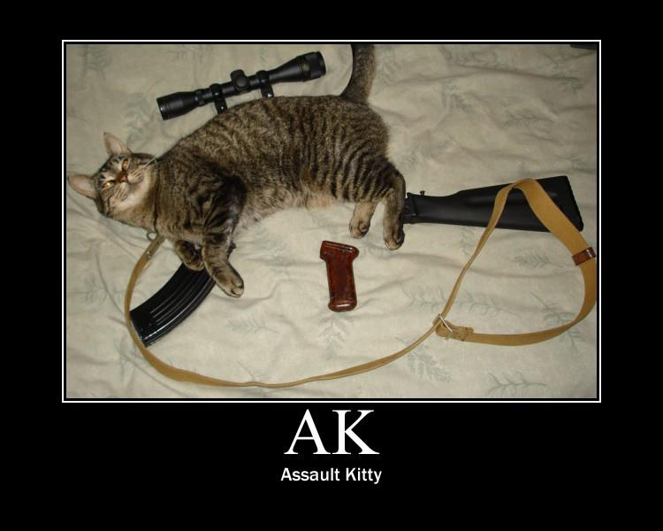 ak assault kitty