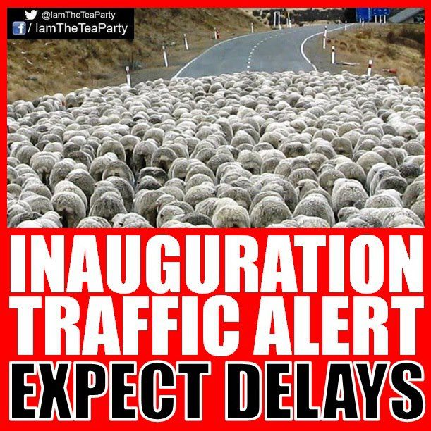 sheep traffic inuaguration