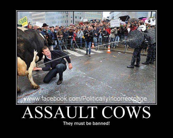 assault cows