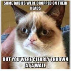 grumpy cat thrown at wall