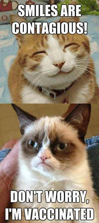 grumpy cat vaccinated