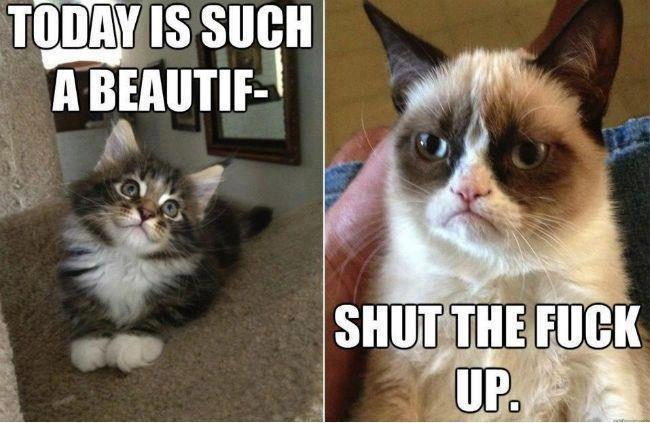 grumpy cat vs cute