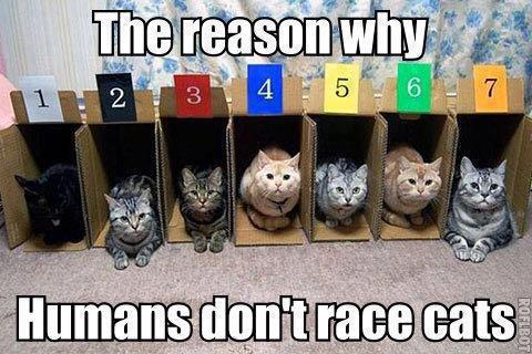 don't race cats