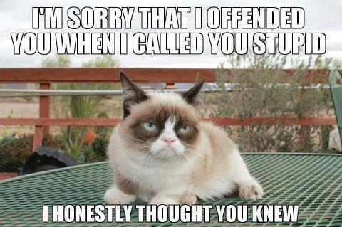 grumpy cat stupid