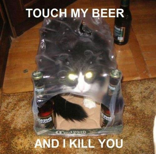 possessed beer cat
